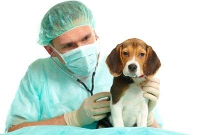 perro enfermo con diarrea