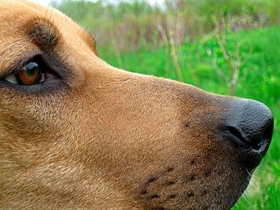 perro con epilepsia