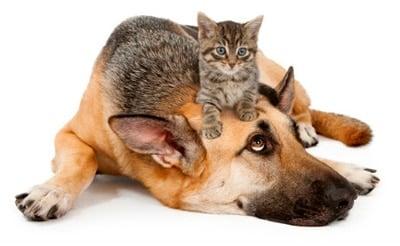 perro con giardias