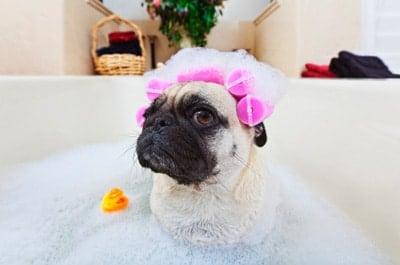 perro en una bañera