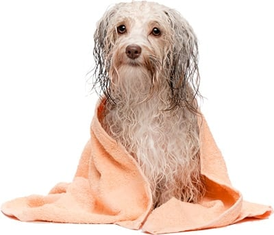 perro secandose despues de un baño