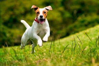 perro feliz y nutrido
