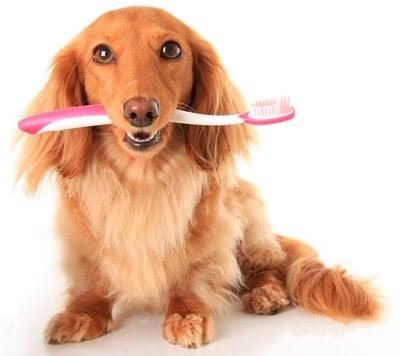 cuidar dientes de un perro