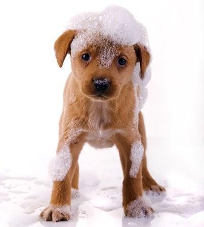 cachorro mojado