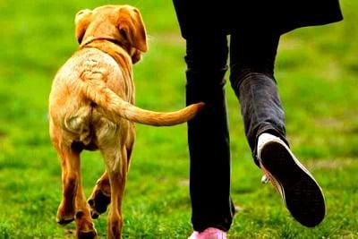 perro moviendo la cola feliz