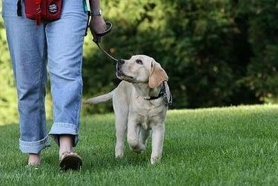 perro-paseando1
