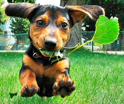 perro con hierba en la boca
