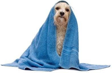 perro secado con toalla