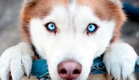 perro con mirada fija