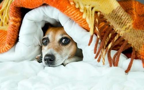 perro asustado que se esconde