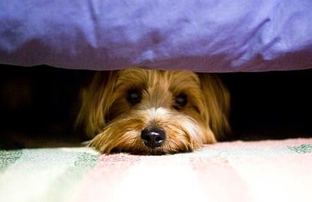 perro asustado