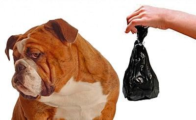 los peligros de que un perro coma heces