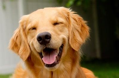 perro contento sonriendo