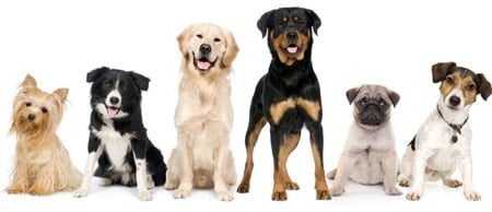 perros preparados para ser educados
