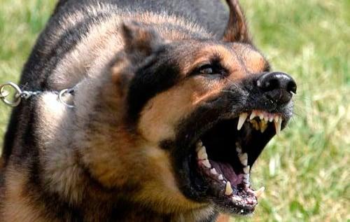 perro enfadado