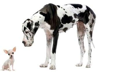 perro de gran tamaño esperando su pienso