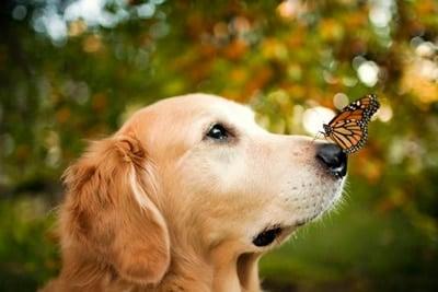 perro y mariposa