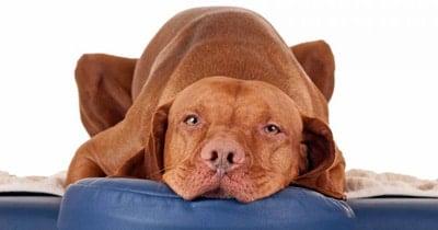 perro masage