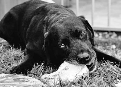 perro mordiendo una piedra