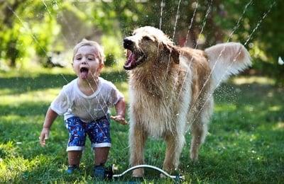 perro jugando con un niño