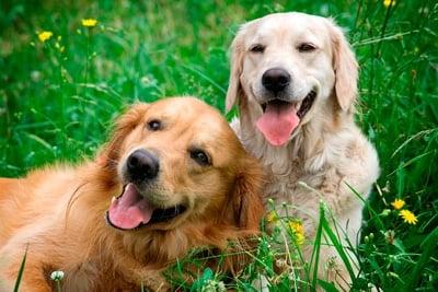 perros con vida normal