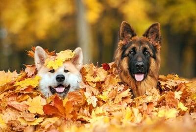perros contentos