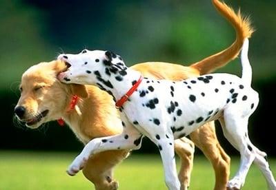 perritos jugando