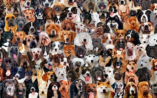 mogollon de perros