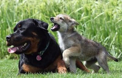 curiosidades de perros