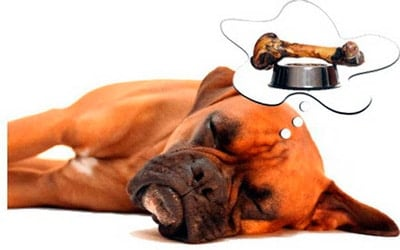 perro soñando con un hueso