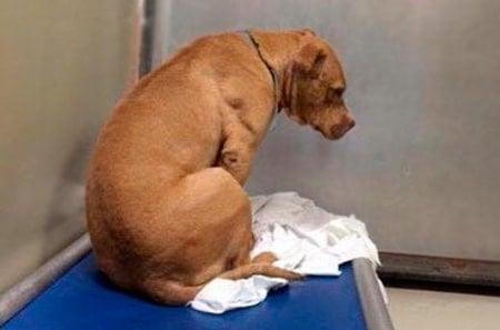 perro triste mirando la pared
