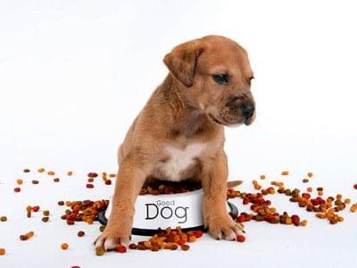 pienso y perro