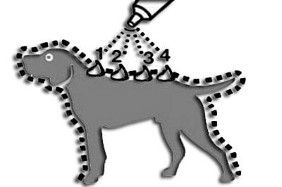 cómo echar una pipeta a un perro