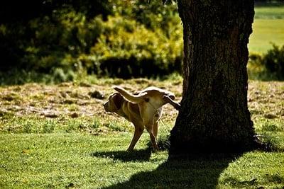 enseñando a un perro a hacer pis en el parque