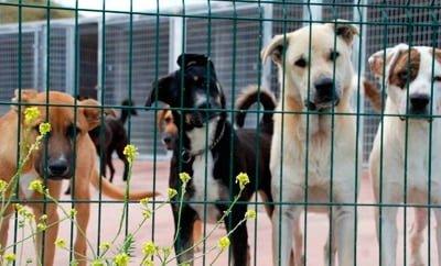 protectora de perros