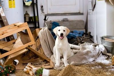cachorro rompiendo cosas
