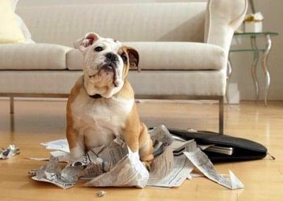 perro rompiendo papeles