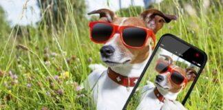 selfie perruno