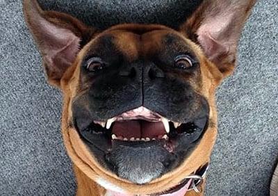 selfie de perro 18