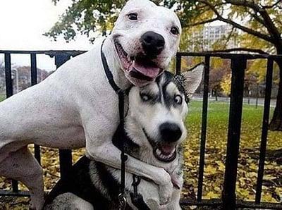 selfie de perro 22