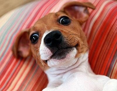selfie de perro 03
