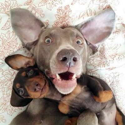 selfie de perro 04
