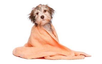 bañando a un can