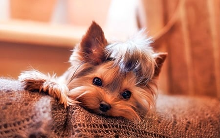 cachorro solo