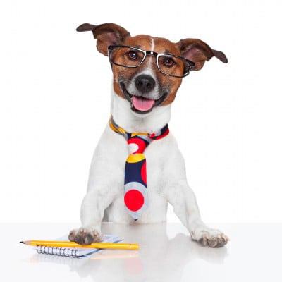 entrevista a un perro