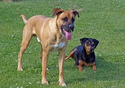 perros sin raza