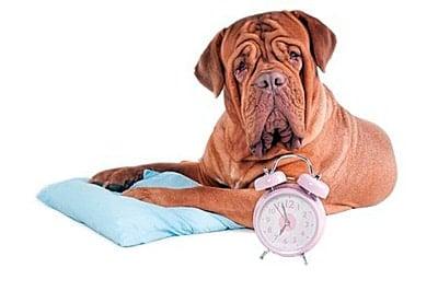perro contando el tiempo
