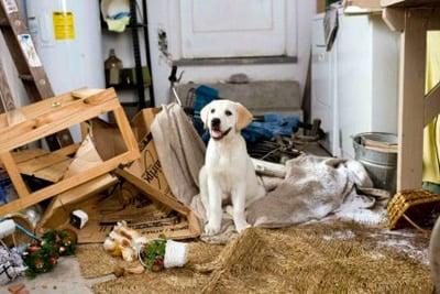 perro con estrés rompe todo