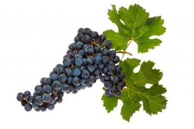 uvas toxicas en perros