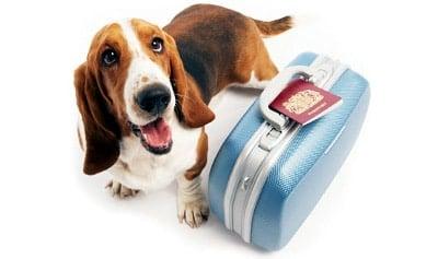 viajar con perro maleta